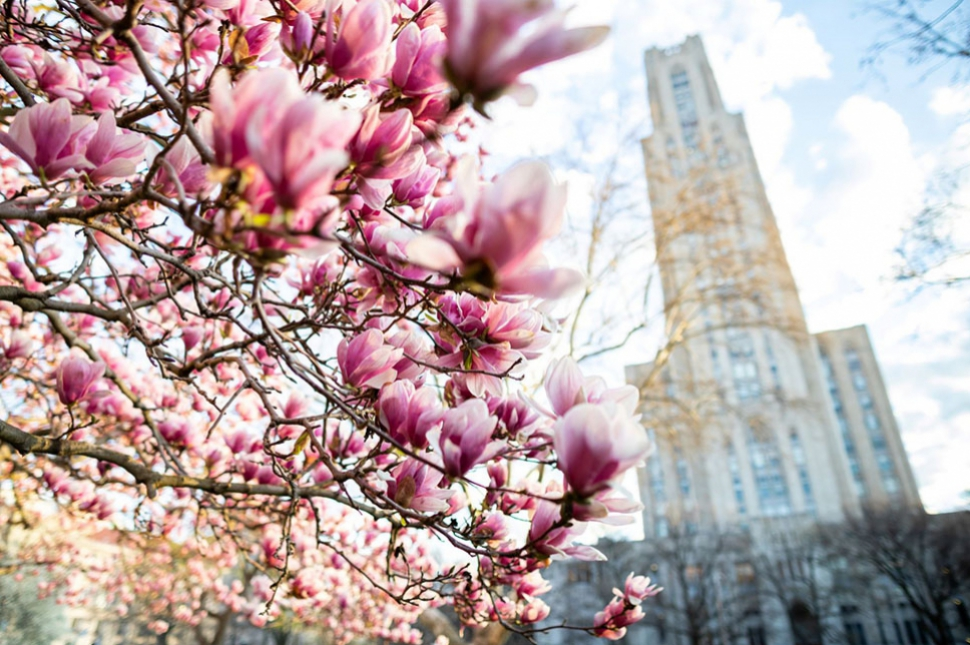 Cathedral of Learning with Magnolia Tree